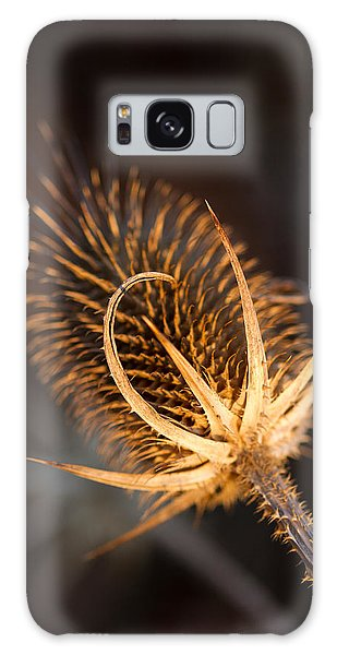 Evening Thistle Galaxy Case