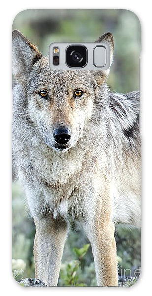 Eye Contact With A Gray Wolf Galaxy Case