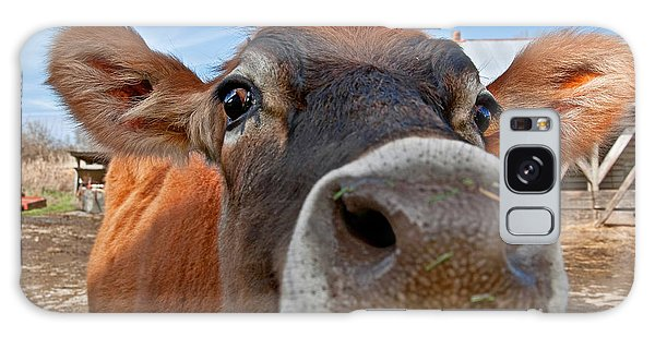 Face Of Young Jersey Cow Heifer Galaxy Case