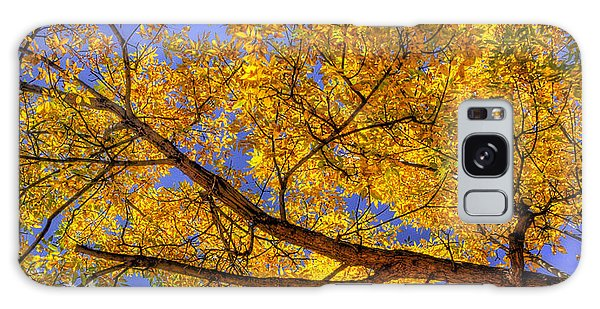 Fall Color Canopy 12161 Galaxy Case