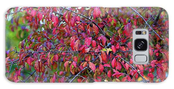 Fall Foliage Colors 05 Galaxy Case
