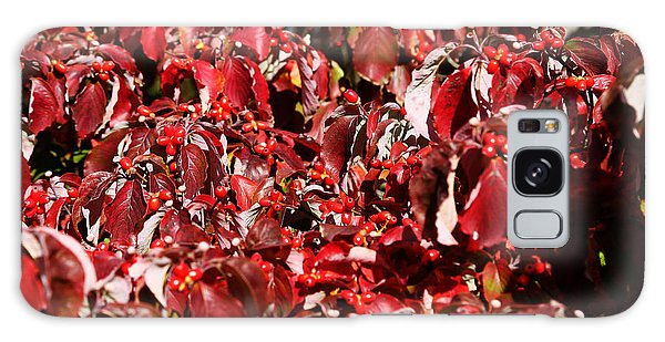 Fall Foliage Colors 08 Galaxy Case