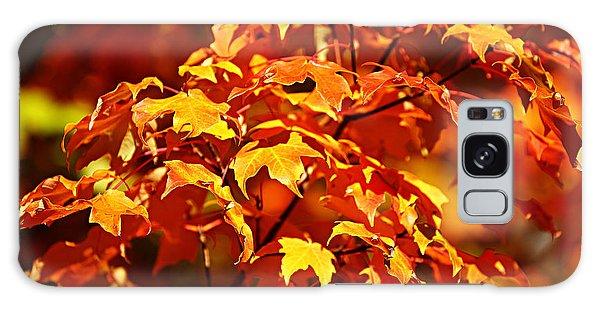 Fall Foliage Colors 14 Galaxy Case