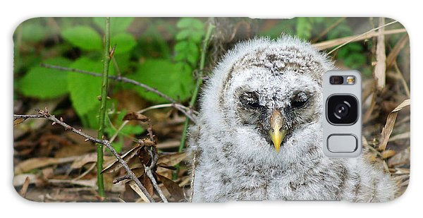Fallen Owl Galaxy Case