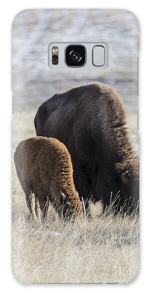 Bison Calf Having A Meal With Its Mother Galaxy Case