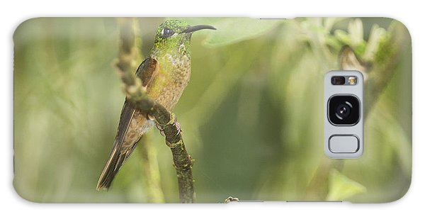 Fawn-breasted Brilliant Hummingbird Galaxy Case