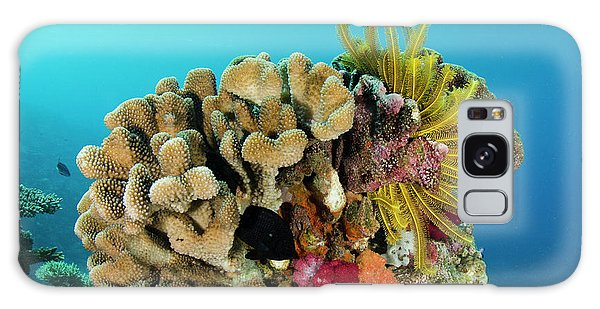 Feather Stars Galaxy Case - Feather Star (comasteridae by Pete Oxford
