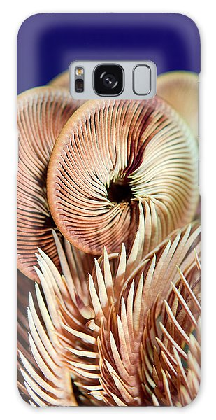 Feather Stars Galaxy Case - Feather Star Crinoid, Raja Ampat by Jaynes Gallery