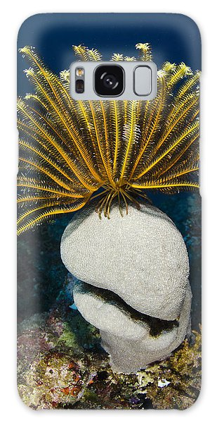 Sea Lily Galaxy Case - Feather Star On Rainbow Reef Fiji by Pete Oxford