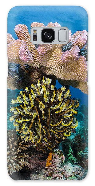 Sea Lily Galaxy Case - Feather Star Rainbow Reef Fiji by Pete Oxford