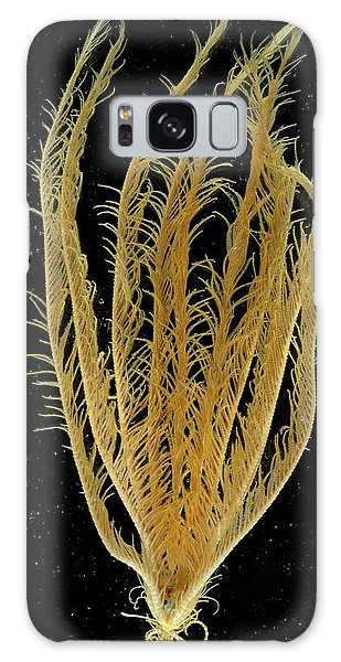 Sea Lily Galaxy Case - Featherstar by British Antarctic Survey/science Photo Library