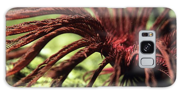 Feather Stars Galaxy Case - Featherstar by Lionel, Tim & Alistair/science Photo Library