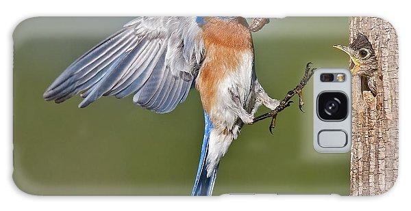 Eastern Bluebird Galaxy Case - Feed Me Daddy by Susan Candelario