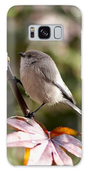 Female Bushtit Galaxy Case by Betty Depee