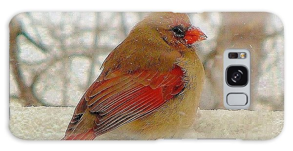Female Cardinal Caught In Snowstorm Galaxy Case