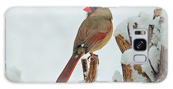 Female Cardinal In The Snow Galaxy Case