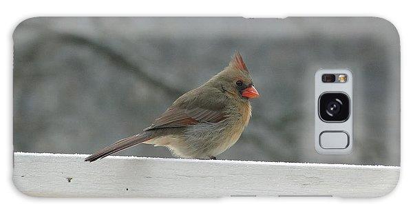 Female Cardinal Posing Galaxy Case by Cindy Croal