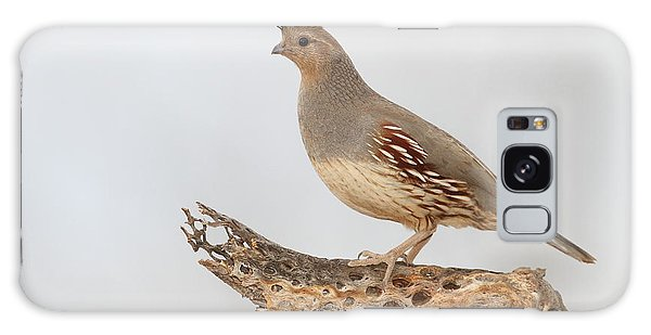 Female Gambel's Quail Galaxy Case