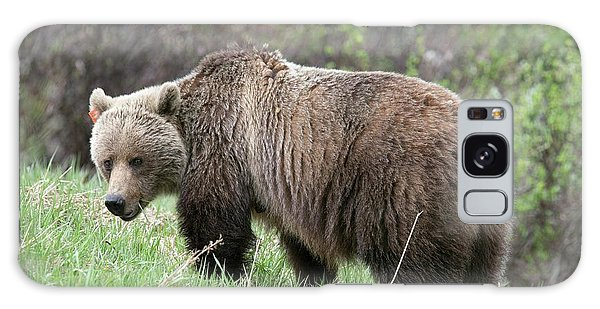 Grizzly Bears Galaxy Case - Female Grizzly Bear by Dr P. Marazzi