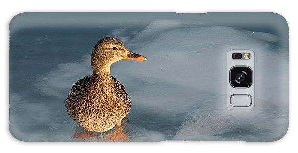 Female Mallard In Icy Water Galaxy Case