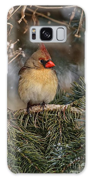 Female Norther Cardinal Galaxy Case