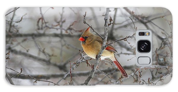 Female Northern Cardinal Galaxy Case