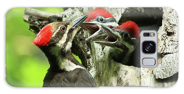 Female Pileated Woodpecker At Nest Galaxy Case by Mircea Costina Photography