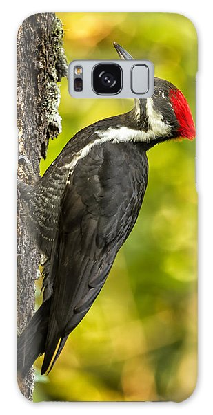 Female Pileated Woodpecker No. 2 Galaxy Case