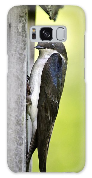 Tree Swallow On Nestbox Galaxy Case