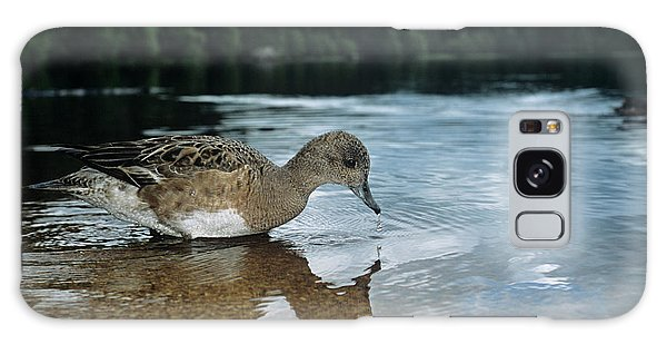Cairngorms National Park Galaxy Case - Female Widgeon by Duncan Shaw/science Photo Library