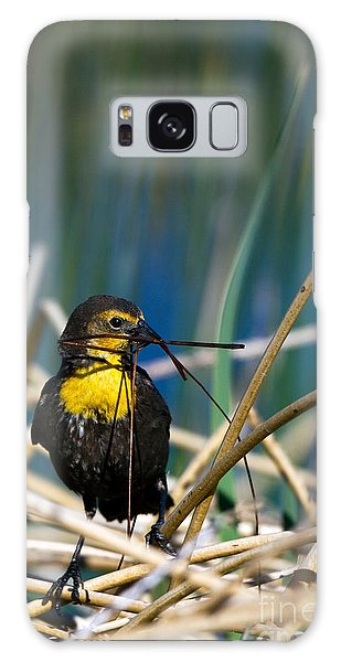 Blackbird Builds A Nest Galaxy Case