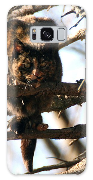 Feral Cat In Pine Tree Galaxy Case