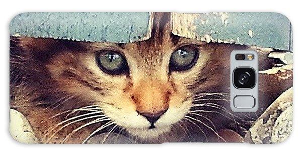 Animals Galaxy Case - Peek A Boo Kitten by Mark Kiver