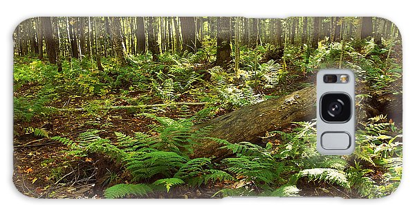 Ferns In The Woods Galaxy Case
