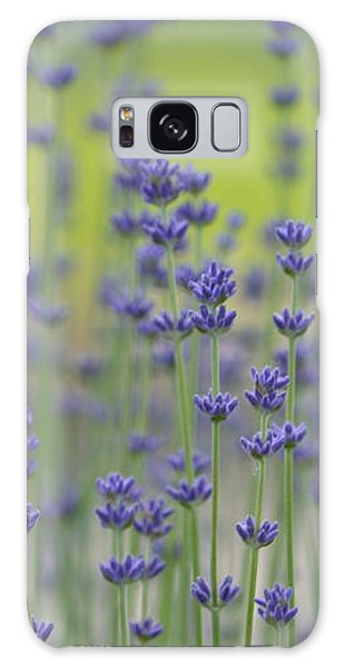 Field Of Lavender Flowers Galaxy Case by P S