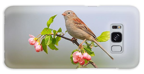 Field Sparrow On Apple Blossoms Galaxy Case by Daniel Behm
