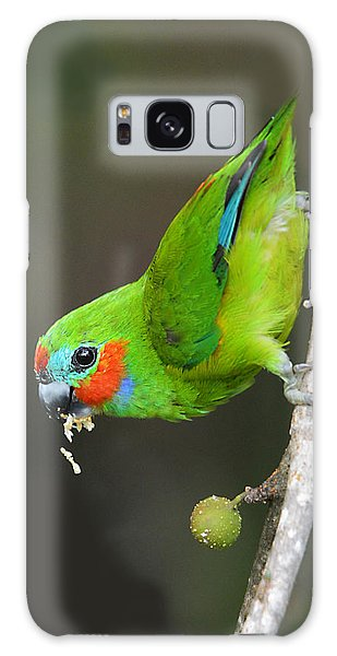 Figparrot Eating Figs Galaxy Case