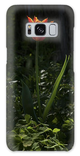 Fire In The Forest Galaxy Case