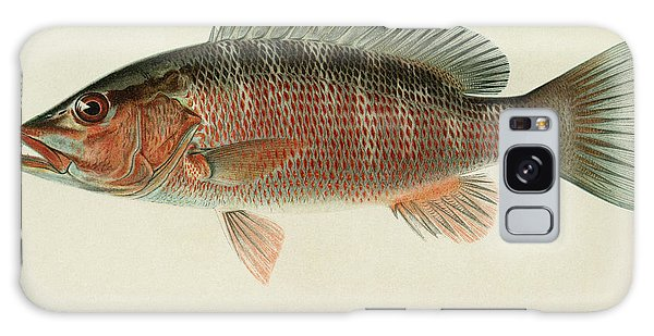 Mangrove Snapper Galaxy Case - Fish Gray Snapper by Granger