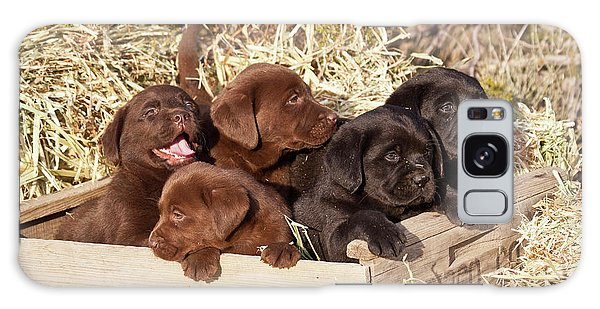 Chocolate Lab Galaxy Case - Five Labrador Retriever Puppies by Zandria Muench Beraldo