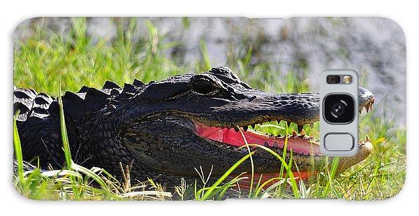Gator Grin Galaxy Case by Al Powell Photography USA
