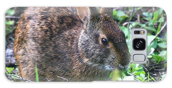 Florida Marsh Rabbit Galaxy Case