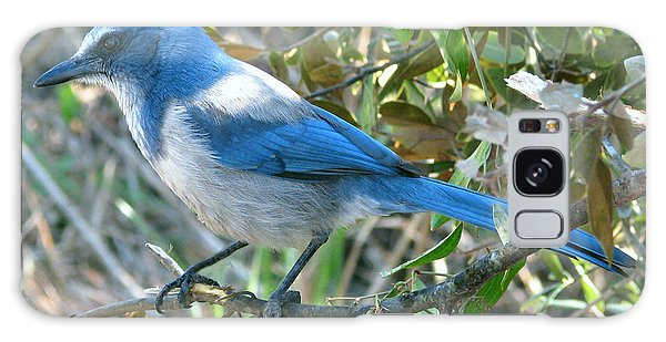 Florida Scrub Jay Galaxy Case by Peg Urban