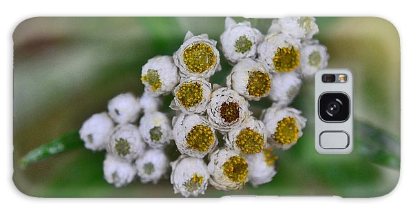 Galaxy Case featuring the photograph Flower Buttons by Mae Wertz