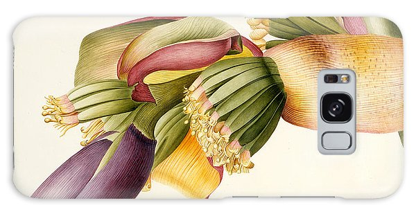Flower Of The Banana Tree  Galaxy Case by Georg Dionysius Ehret