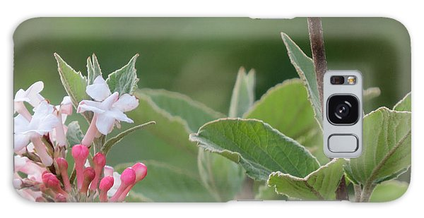 Flowering Shrub 1 Galaxy Case