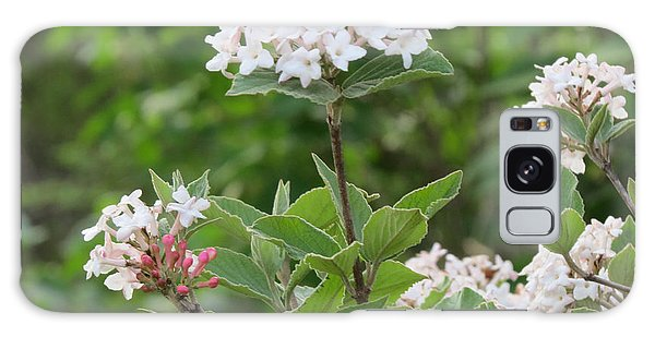 Flowering Shrub 2 Galaxy Case