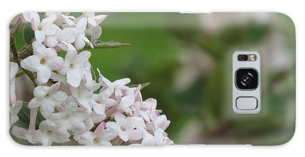 Flowering Shrub 4 Galaxy Case