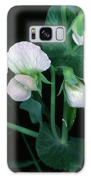 Traits Galaxy Case - Flowers Of The Garden Pea by Dr Jeremy Burgess/science Photo Library.