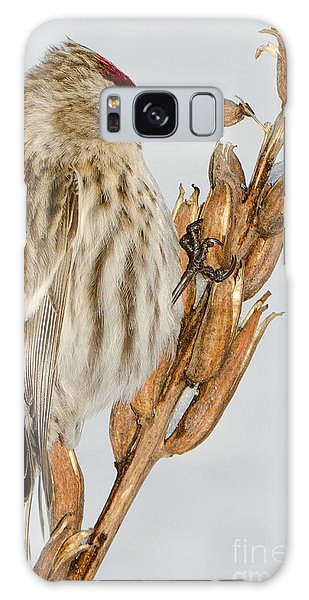 Foraging Redpoll Galaxy Case